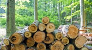 Ekolodzy wygrali ws. Puszczy Białowieskiej? Jest decyzja ministra