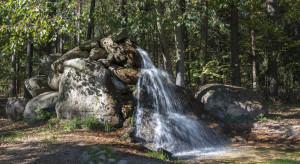 Europoseł PiS pyta KE o brak reakcji w sprawie wycinki lasu w Bawarii