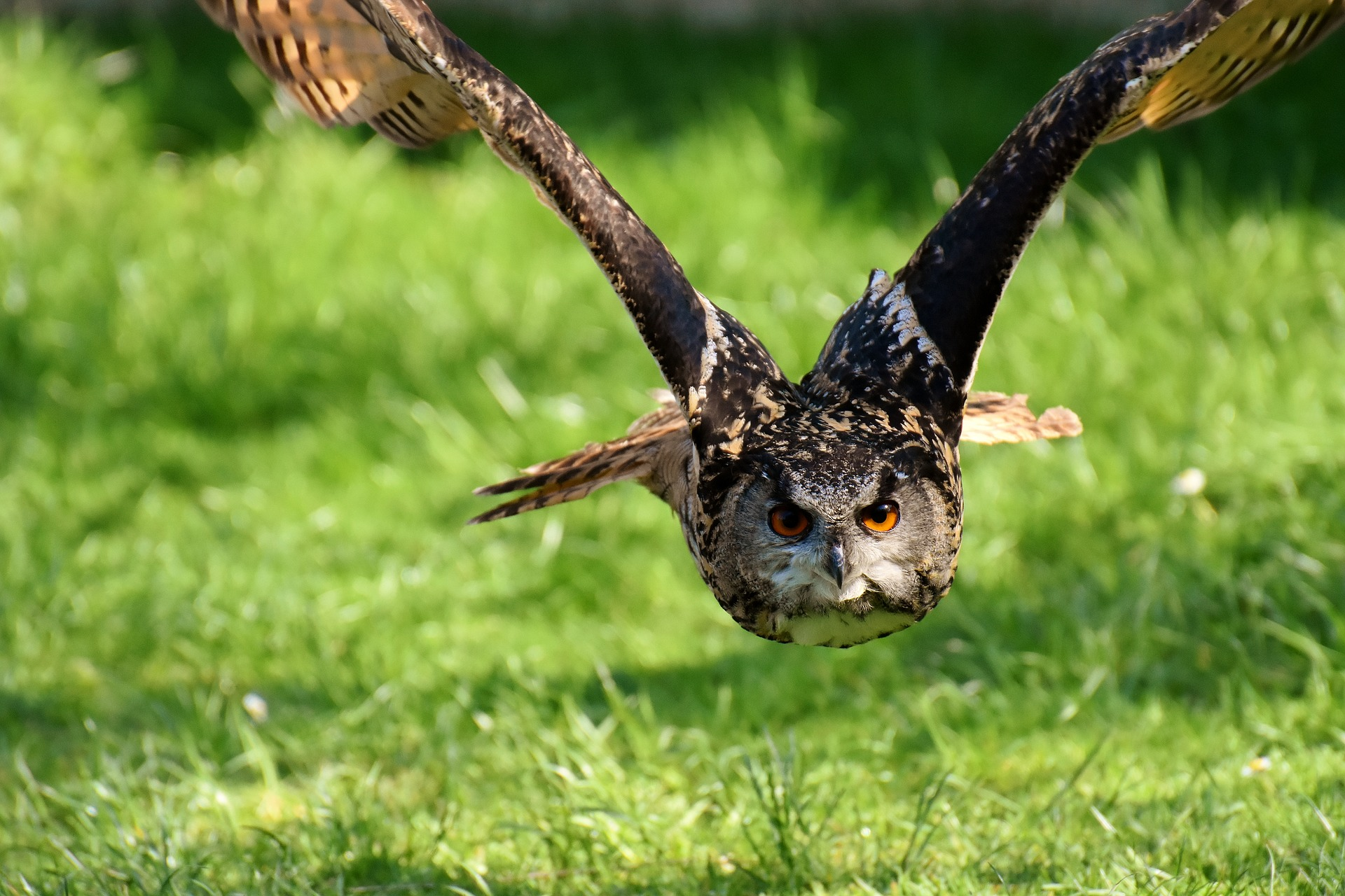 Dzień Praw Zwierząt, który obchodzą ekolodzy, nawiązuje do uchwalenia przez Sejm ustawy o ochronie zwierząt. Stało się to 22 maja 1997 r. (fot. pixabay.com)