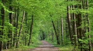 Posłowie stają w obronie warszawskich drzew
